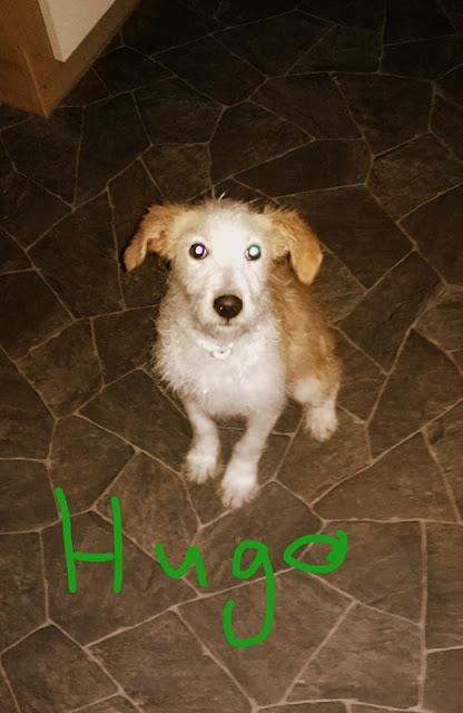 Hugo u novom domu - 29197328_1220982734698878_1962477989477290152_n.jpg