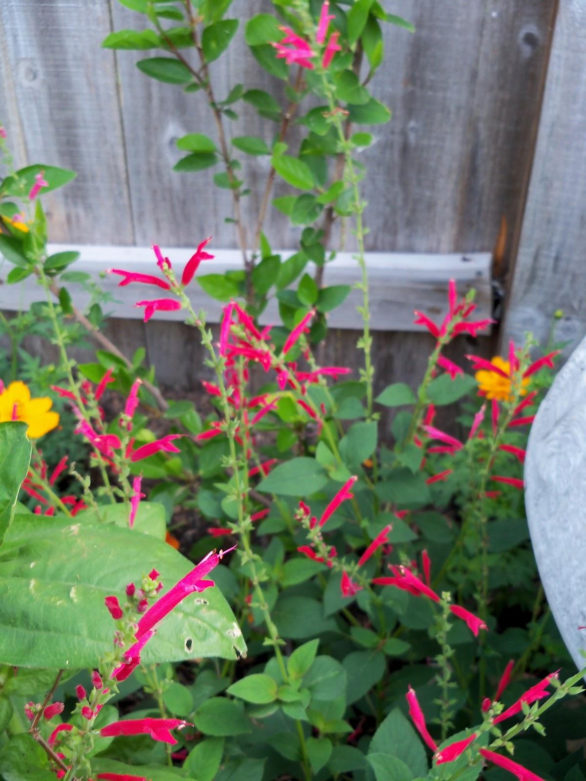 Gardening 2011 - 100_8202.JPG