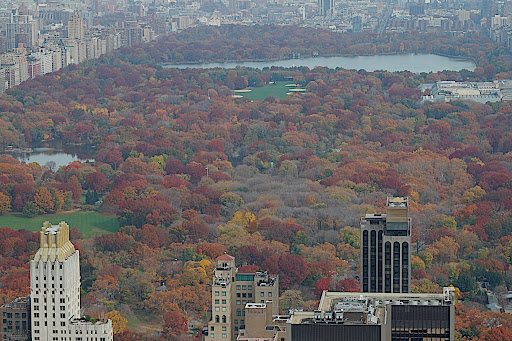 Central park, from Top of the Rock