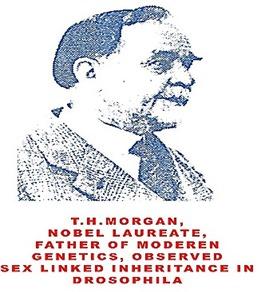 T.H. Morgan