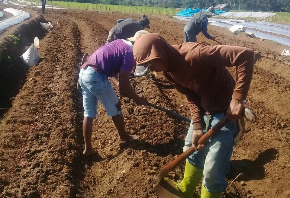 """Pertanian Organik adalah Pertanian """"Amal Jariyah"""" Yang Mengkonsumsi Menjadi Sehat"""