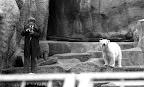 Fotózás a jegesmedvénél a budapesti állatkertben, 1974 (Fotó: Fortepan)