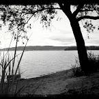 20120612-01-tree-beach.jpg