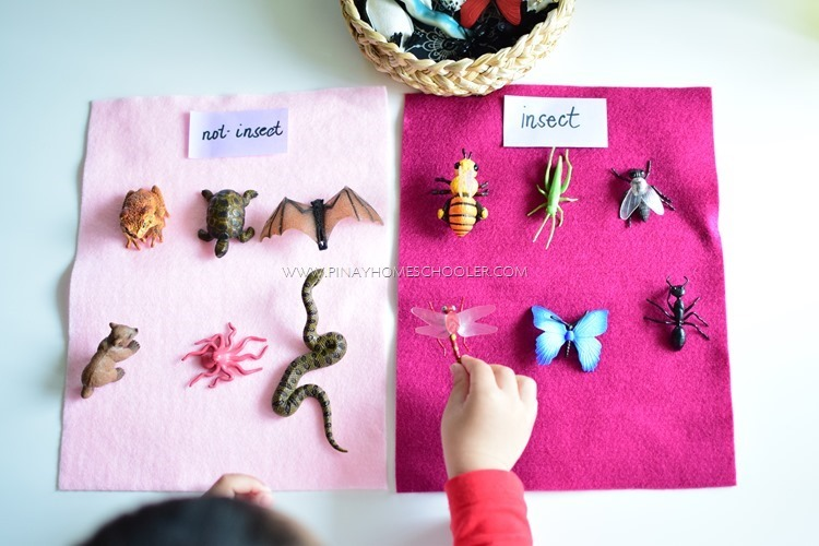 Insects VS Non-Insects Activity for Kids