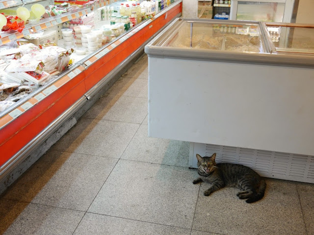 cat meowing inside a supermarket in Shanghai