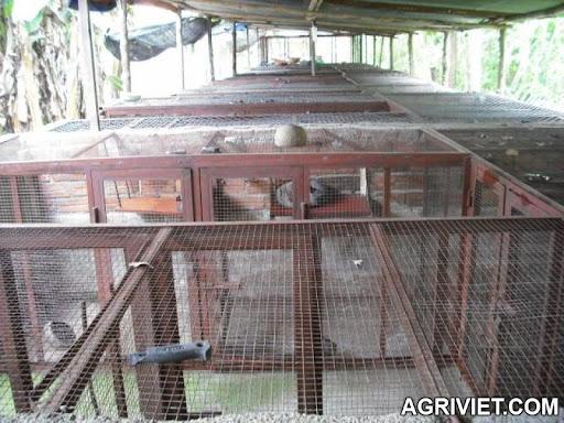 Agriviet.Com-7878254_photo-chon-huong-004.jpg