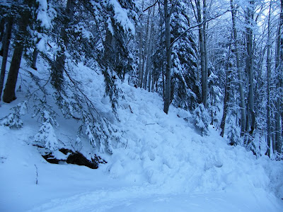 avalanche in woods