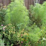 Gardening 2010, Part Three - 101_4718.JPG