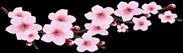 Blossom_Spring_Pink_Twig_Transparent_PNG_Clip_Art_Image