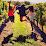 M&M Wine Grape Co.'s profile photo