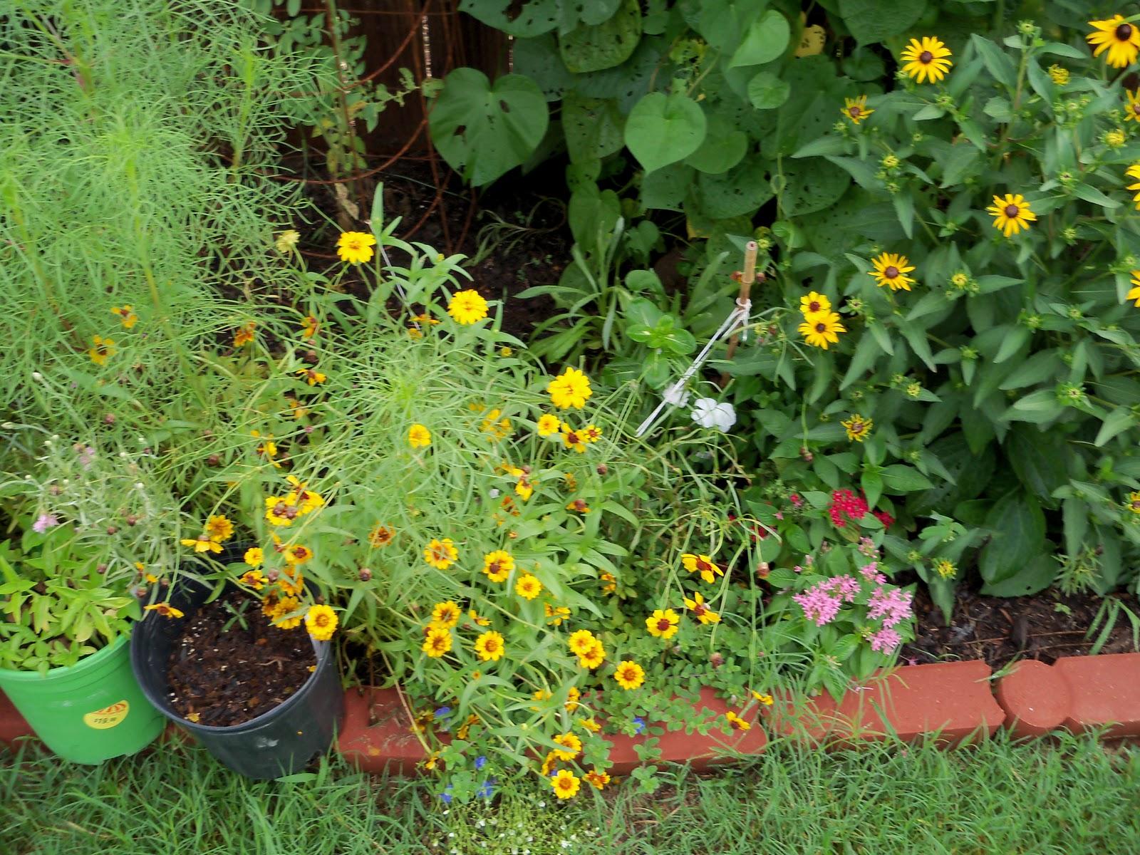Gardening 2010, Part Three - 101_4714.JPG
