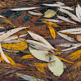 floating-leaves_MG_2335-copy.jpg