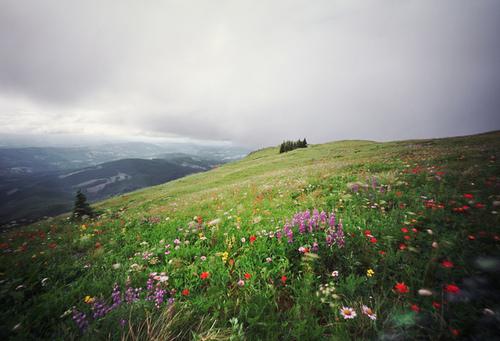 صور طبيعية, صور ازهار في الطبيعة, اروع صور ازهار طبيعية 2013