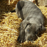 Star & True Blues February 21, 2008 Litter - HPIM1202.JPG