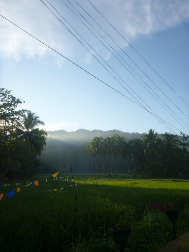 rice farm, loboc, bohol