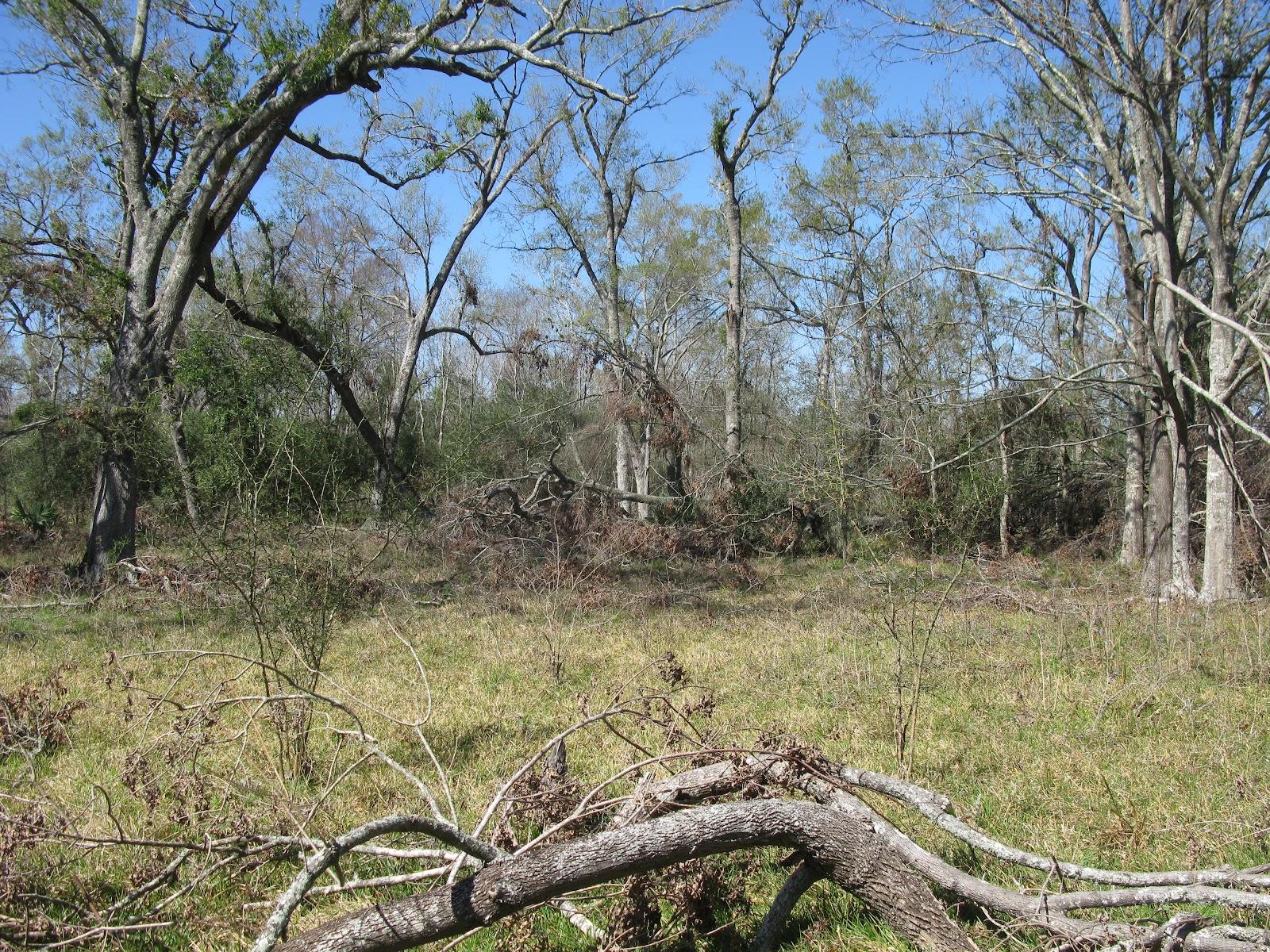 Hardwood Forest Overlook