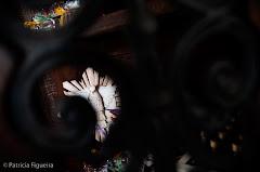 Foto 0485. Marcadores: 13/06/2009, Casamento Flavia e Daniel, Decoracao Casamento, Decoracao Festa, Fotos de Decoracao, MF Monica Fernandes Producao Eventos, Teresopolis
