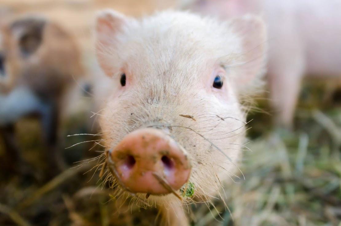 Fusion Farm állatsimogató játszóház Kaposvár