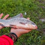 20160611_Fishing_Pryvitiv_041.jpg
