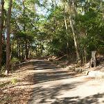 Sealed trail towards the rainforest in Blackbutt Reserve (399400)