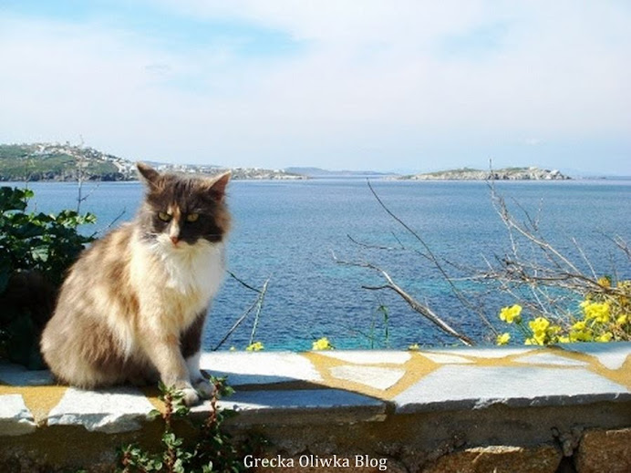 na murku łaciaty kot na tle niebieskiego morza