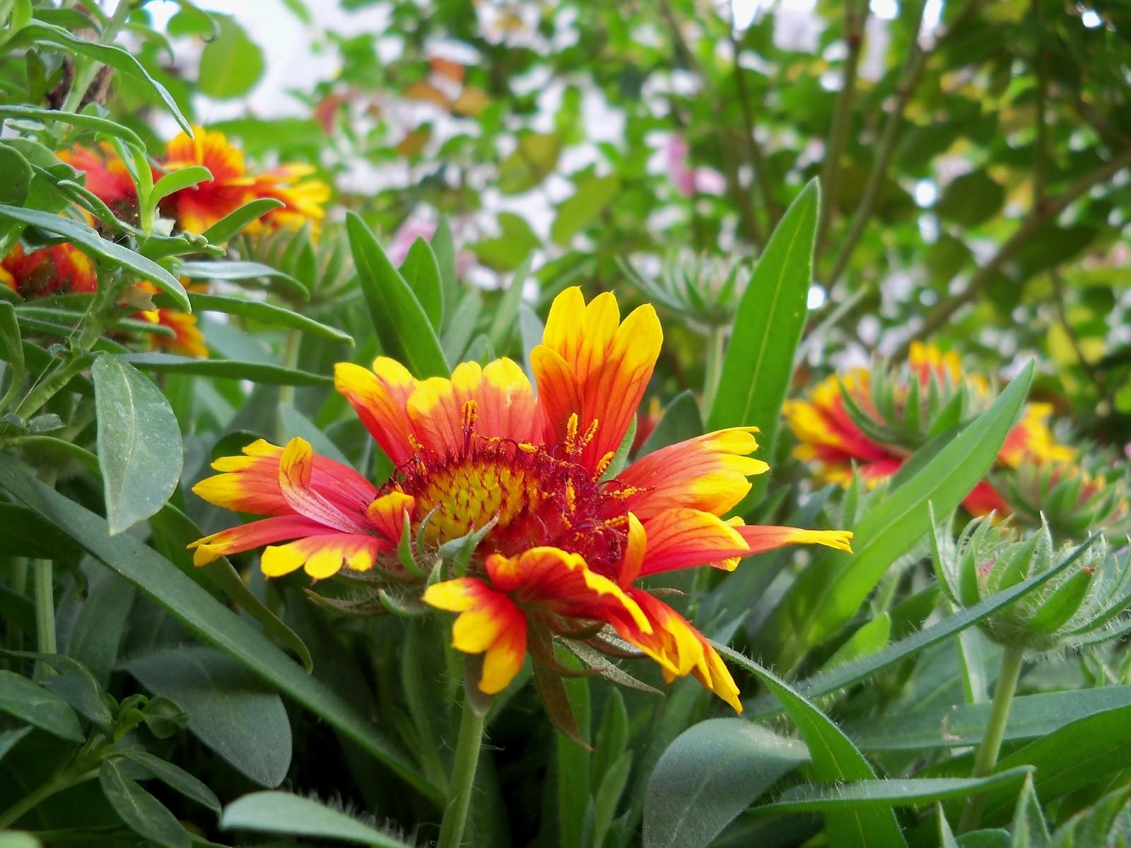 Gardening 2011 - 100_7136.JPG
