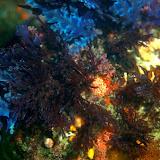 more_reef.jpg