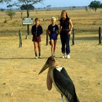 84 africa stork JJJ.jpg