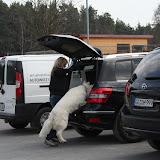 Auch die Autofahrt kann zum Problem werden - wenn der Hund nicht einsteigen will