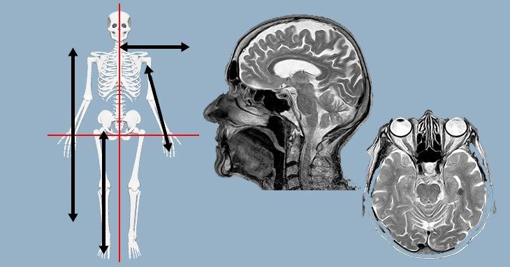 Planos e termos de referência utilizados na descrição anatômica
