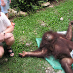 Vey close to the Orang Utang. Touching not allowed!