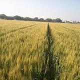 Maher-Farming-09.jpg