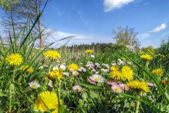 Photo: In den Frühling bei Samtens (HDR)