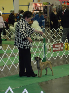St. Cloud, MN show  Dec. 2011Shea took Best of Breed with Becky handling.What Fun!
