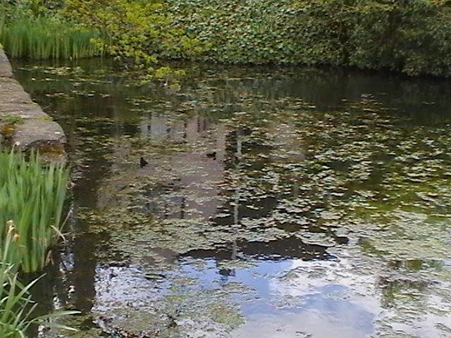 Moorhens on the Pond April 2008 - IMGA3956.jpg