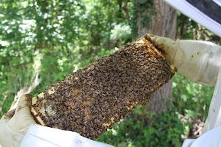 PLC Honey Fiesta 7/10/16 - IMG_3589.JPG