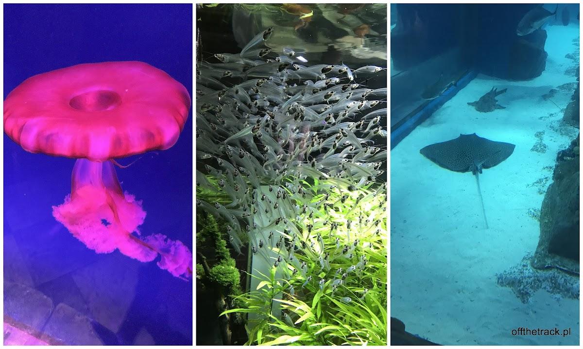 Oceanarium w centrum handlowym w Dubaju, Zjednoczone Emiraty Arabskie