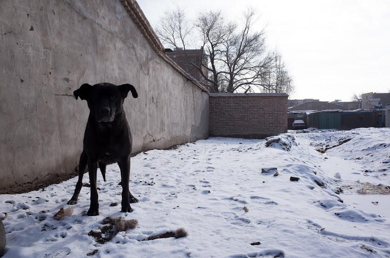 161231 三和賓館裏路地の犬