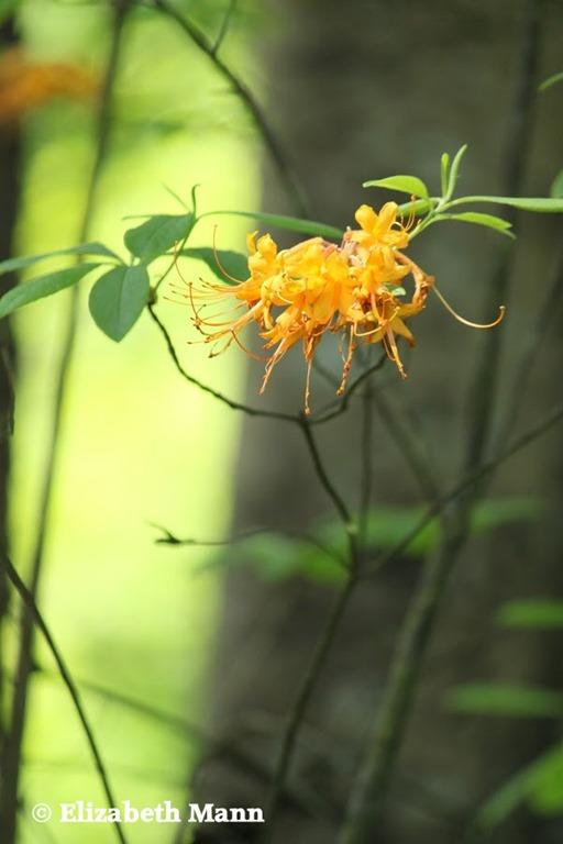 [flower10%5B4%5D]