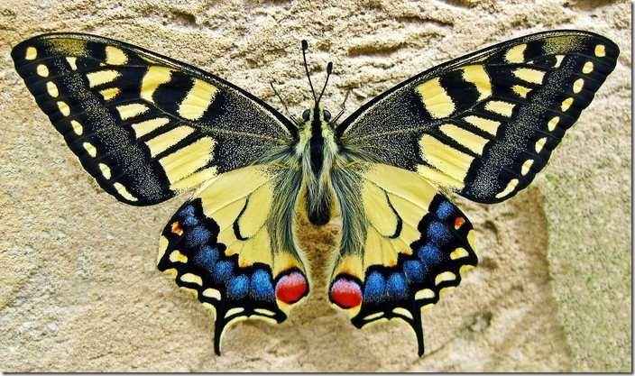 The interpretation of butterfly in Islam