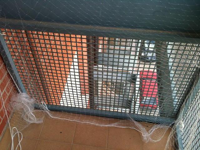 redes - Resumen de ideas para mosquiteras y redes ventanas y balcón para gatos. IMG_2654
