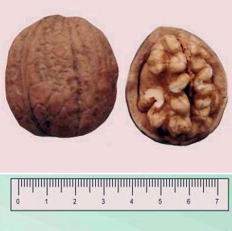 Коржеуцкий грецкий орех