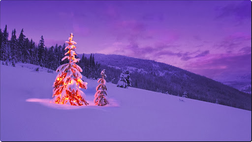 Christmas Trees at Twilight.jpg