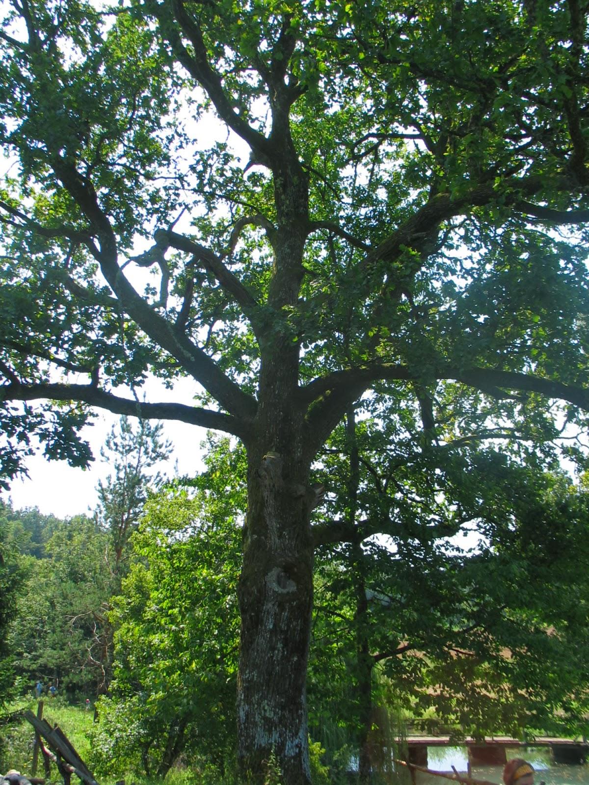 Taborjenje, Lahinja 2005 1. del - img_1107.jpg