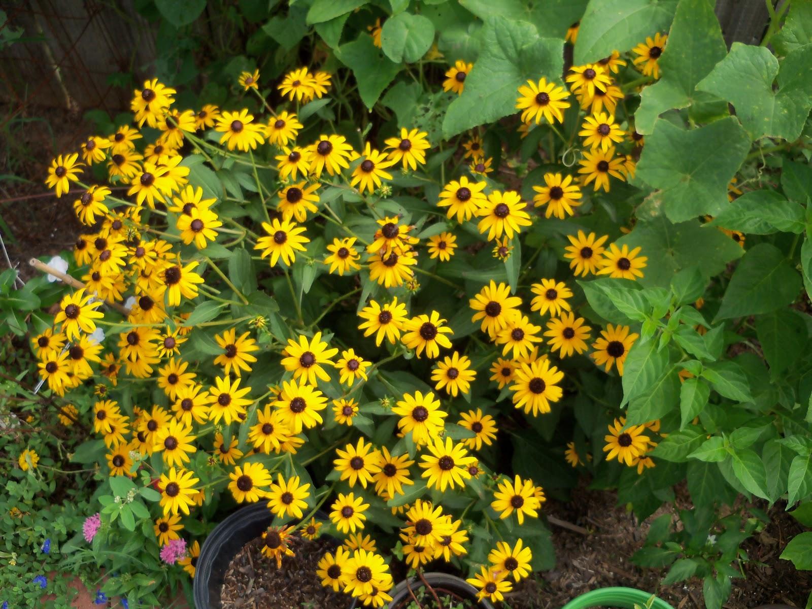 Gardening 2010, Part Three - 101_5239.JPG