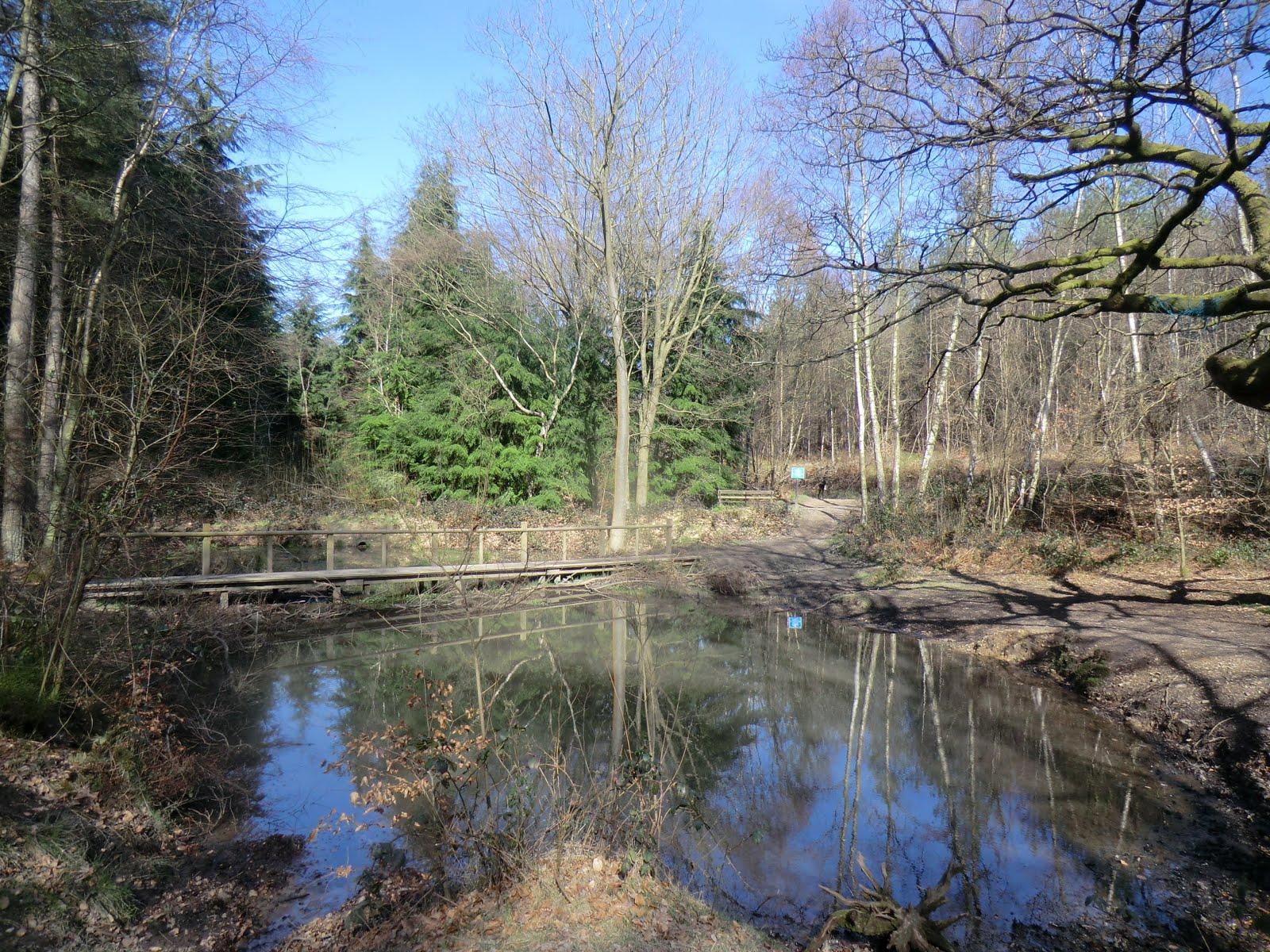 CIMG2873 Pond, Limspfield Chart