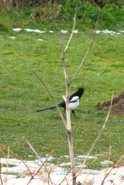 black and white bird in the park