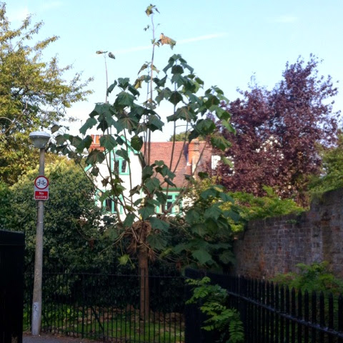 Tree Following: A double update