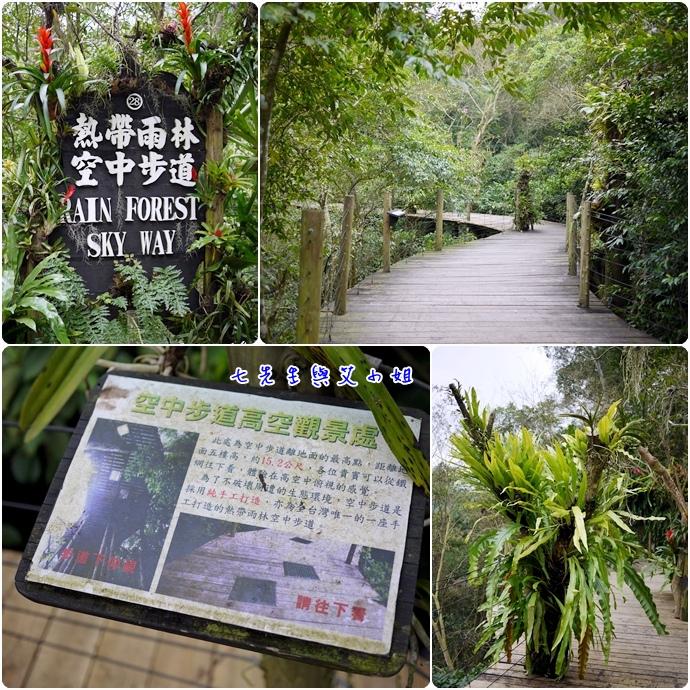 33 熱帶雨林空中步道