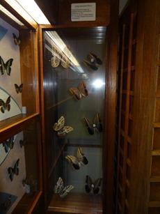 2016.03.14-008 papillons